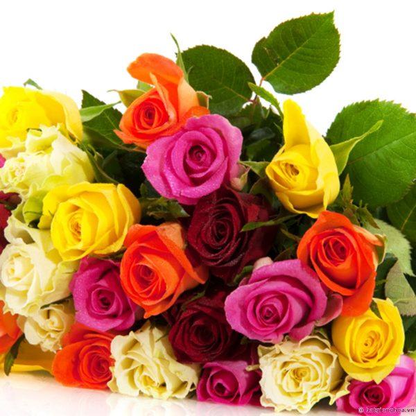 Hoa hồng nở vào mùa nào trong năm?