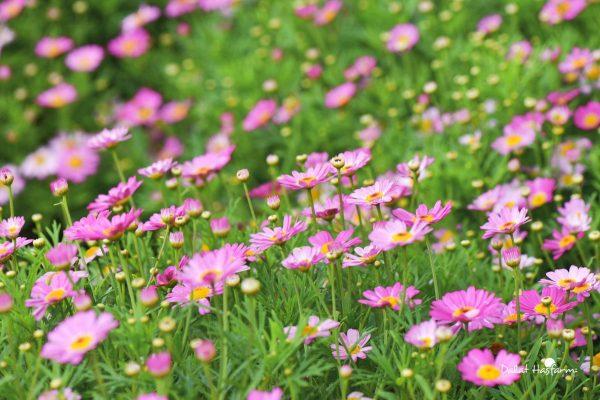 Những loài hoa mang ý nghĩa mạnh mẽ, bạn biết chưa?