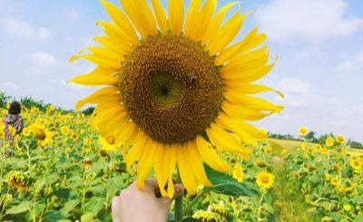 tặng hoa hướng dương có ý nghĩa gì
