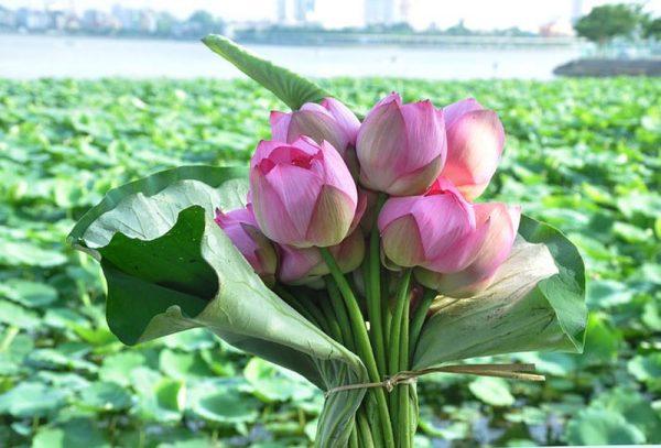5 loại hoa tặng sinh nhật cho nam ý nghĩa nhất