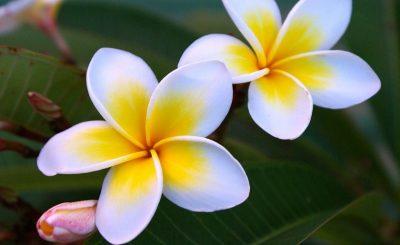 Bạn có biết quốc hoa của các nước Đông Nam Á?