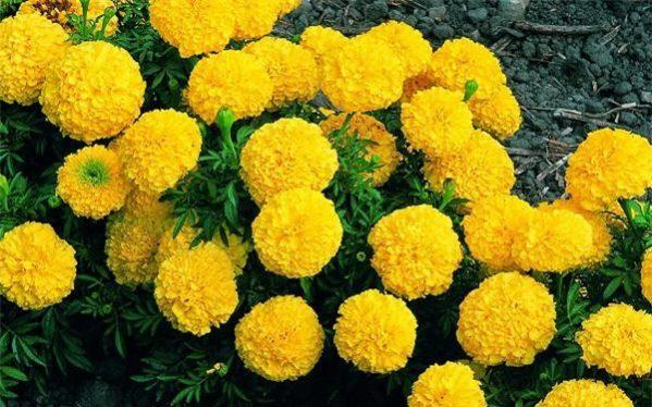 Những loại hoa không cắm trên bàn thờ cần chú ý