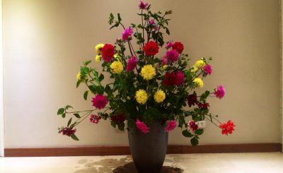 Cách cắm hoa thược dược độc đáo đẹp rực rỡ