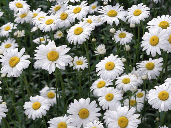 Mùa đông trồng hoa gì là hợp nhất?