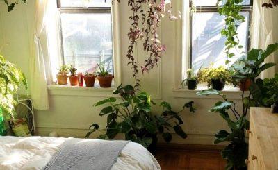 Trồng cây trong phòng ngủ có tốt không?