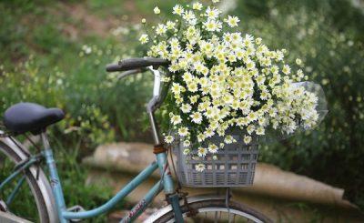 Bật mí ý nghĩa của các loài hoa theo tháng sinh