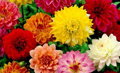 Các loài hoa đẹp nở vào mùa xuân