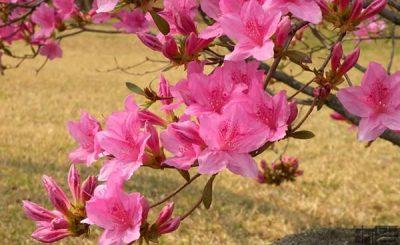 Các loài hoa nở vào mùa đông đẹp nhất