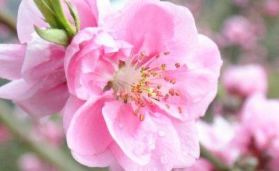 Điểm danh những loài hoa tượng trưng cho may mắn