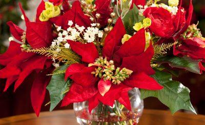 3 loại hoa để bàn phù hợp người với mệnh Kim