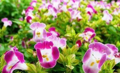Ý nghĩa của hoa mắt nai – loài hoa trong trẻo