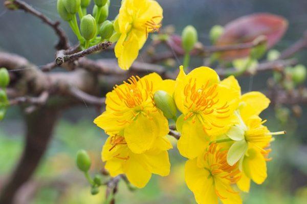 Các loại hoa phổ biến ngày Tết đẹp và ý nghĩa