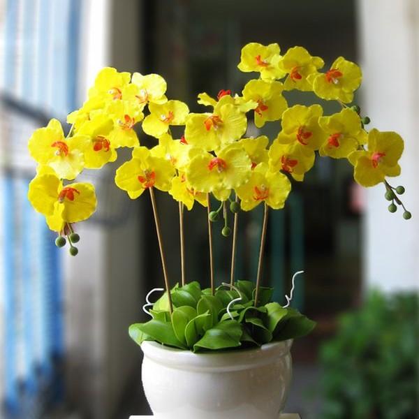Những loại hoa đẹp tươi lâu chưng Tết