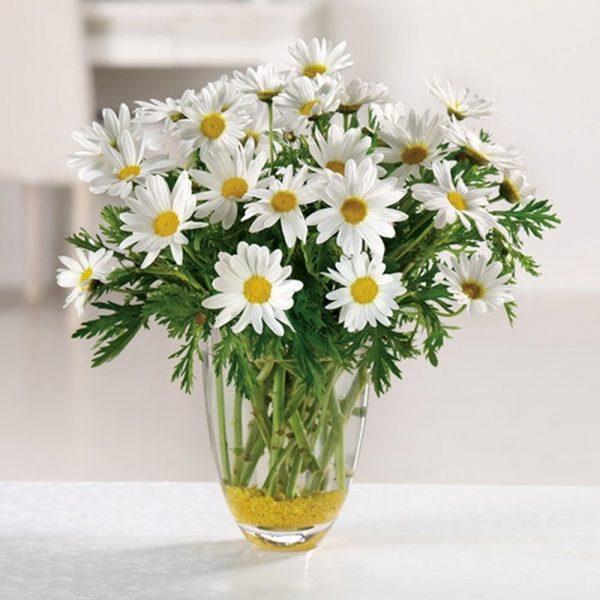 Bật mí cách giữ hoa cúc tươi lâu nhất