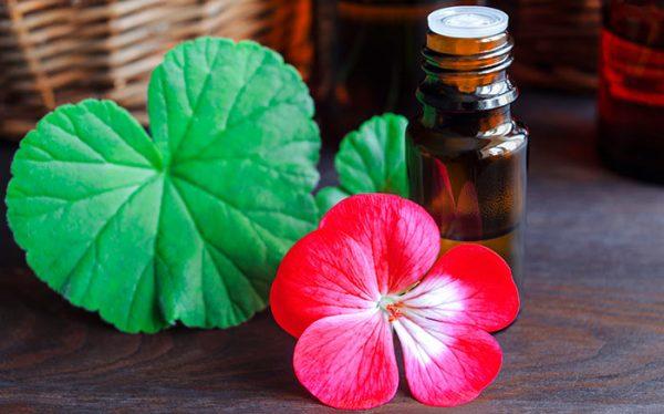 Tác dụng của tinh dầu hoa phong lữ